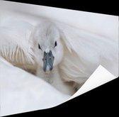 Baby zwaan Poster 60x40 cm - Foto print op Poster (wanddecoratie)