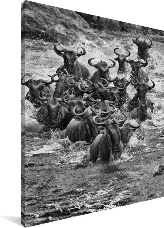 Hedendaags bol.com | Een grote kudde Gnoe's zwart wit Canvas 120x160 cm ZL-73
