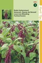 2 stuks Amaranthus Caudatus Rood