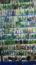 Starter Mix Aquariumplanten