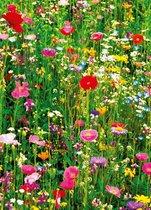 Wizard+Genius bloemen veld Flower Field Fotobehang 183x254cm