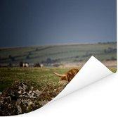 Een Schotse hooglander kijkt over een paar stenen Poster 40x30 cm - klein - Foto print op Poster (wanddecoratie woonkamer / slaapkamer) / Wilde dieren Poster