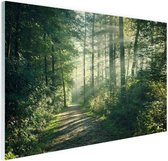 Een dichtbegroeid bos Glas 180x120 cm - Foto print op Glas (Plexiglas wanddecoratie) XXL / Groot formaat!