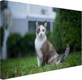 Siamese kat Canvas 60x40 cm - Foto print op Canvas schilderij (Wanddecoratie woonkamer / slaapkamer) / Dieren Canvas Schilderijen