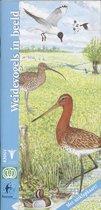 In Beeld 1 - Weidevogels in beeld