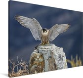 Een slechtvalk met gespreide vleugels Canvas 90x60 cm - Foto print op Canvas schilderij (Wanddecoratie woonkamer / slaapkamer)