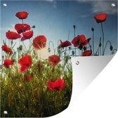 Tuinposter - Lange rode Klaprozen in Toscane op een zonnige dag - 100x100 cm - XXL