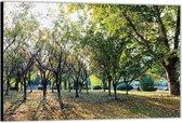 Dibond –Bomen– 90x60 Foto op Aluminium (Wanddecoratie van metaal)
