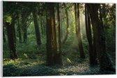 Plexiglas –Bomen in het Bos met de Zon– 60x40 (Wanddecoratie op Plexiglas)