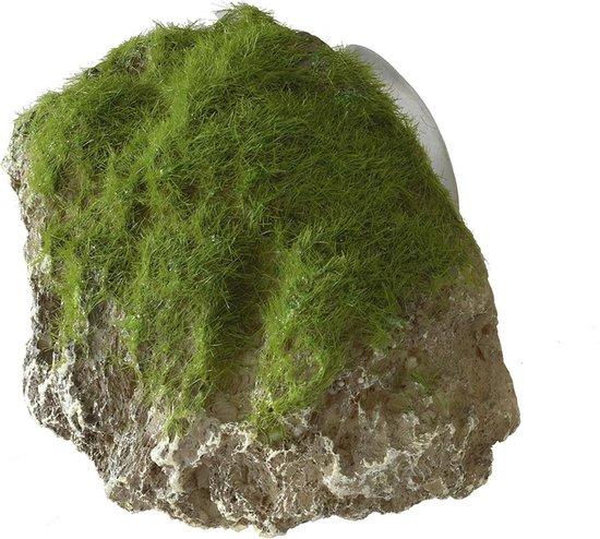 Aqua Della Decor Moss Stone Met Zuignap Small 12x9.5x10.5 cm