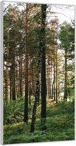 Plexiglas –Bos met Planten– 100x200cm Foto op Glas (Wanddecoratie op Plexiglas)