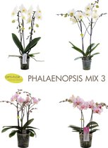 OPTI-FLOR GIFTBOX MIX 3 (t.w.v. €120,-)