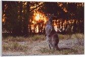 Plexiglas –Kangaroo in het Wild met de Zon– 60x40 (Wanddecoratie op Plexiglas)