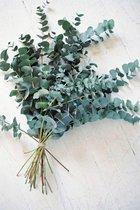 Eucalyptus - Droogbloemen - Landelijk - 1 bos
