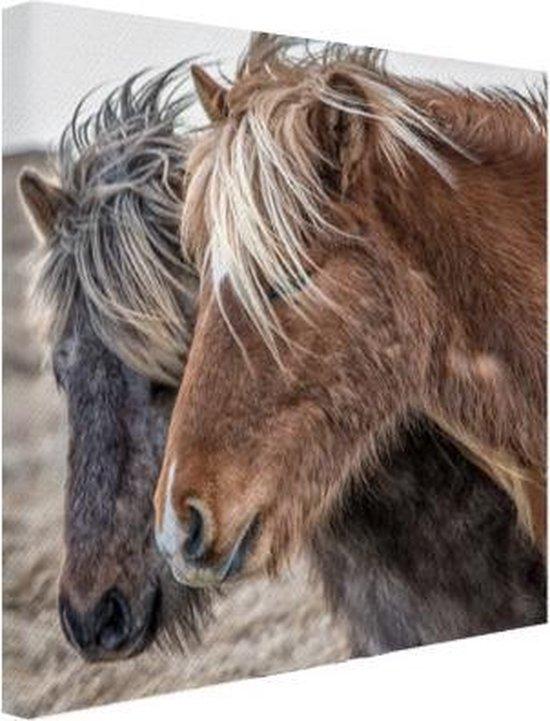 Onwijs bol.com | IJslandse paarden Canvas 50x50 cm - Foto print op Canvas KK-13
