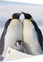 Pinguingezin  Tuinposter 40x60 cm - Foto op Tuinposter / Schilderijen voor buiten (tuin decoratie)