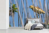 Fotobehang Ralreiger - Ralreiger omringt door  riet fotobehang vinyl breedte 600 cm x hoogte 400 cm - Foto print op vinyl behang (in 7 formaten beschikbaar) - slaapkamer/woonkamer/kantoor