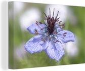Close-up van een nigelle tijdens de bloei Canvas 60x40 cm - Foto print op Canvas schilderij (Wanddecoratie woonkamer / slaapkamer)
