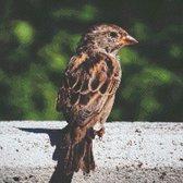 MyHobby Borduurpakket – Bruine vogel 40×40 cm - Aida stof 5,5 kruisjes/cm (14 count)