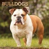Bulldogs Kalender 2021