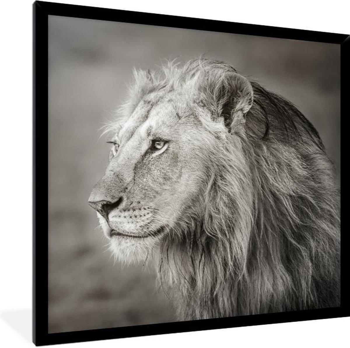 Foto in lijst - Wegkijkende leeuw fotolijst zwart zonder passe partout 40x40 cm - Poster in lijst (Wanddecoratie woonkamer / slaapkamer)