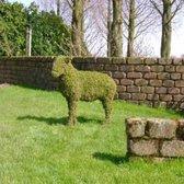 Tuinbeeld -  Schaap - Mos