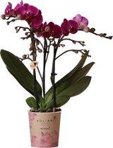 Kolibri Orchids | Phalaenopsis orchidee potmaat Ø9cm | paars