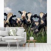Fotobehang vinyl - Grijze lucht boven de kudde Friese koeien breedte 220 cm x hoogte 220 cm - Foto print op behang (in 7 formaten beschikbaar)