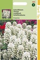 Hortitops Zaden - Iberis Coronaria Empress Wit
