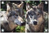 Tuinposter –Wolvenpaar– 150x100 Foto op Tuinposter (wanddecoratie voor buiten en binnen)