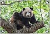 Tuinposter –Reuzenpanda op Takken– 150x100 Foto op Tuinposter (wanddecoratie voor buiten en binnen)