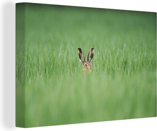 Bruine haas in een grasveld 140x90 cm - Foto print op Canvas schilderij (Wanddecoratie woonkamer / slaapkamer)