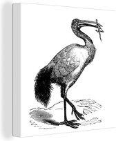 Illustratie van een etende ibis in zwart-wit 80x60 cm - Foto print op Canvas schilderij (Wanddecoratie woonkamer / slaapkamer)