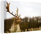 Damhert Canvas 30x20 cm - klein - Foto print op Canvas schilderij (Wanddecoratie woonkamer / slaapkamer) / Wilde dieren Canvas Schilderijen