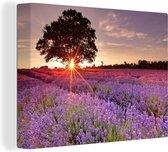 De zon schijnt door een eenzame boom in een lavendelveld Canvas 160x120 cm - Foto print op Canvas schilderij (Wanddecoratie woonkamer / slaapkamer) / Bloemen Canvas Schilderijen XXL / Groot formaat!