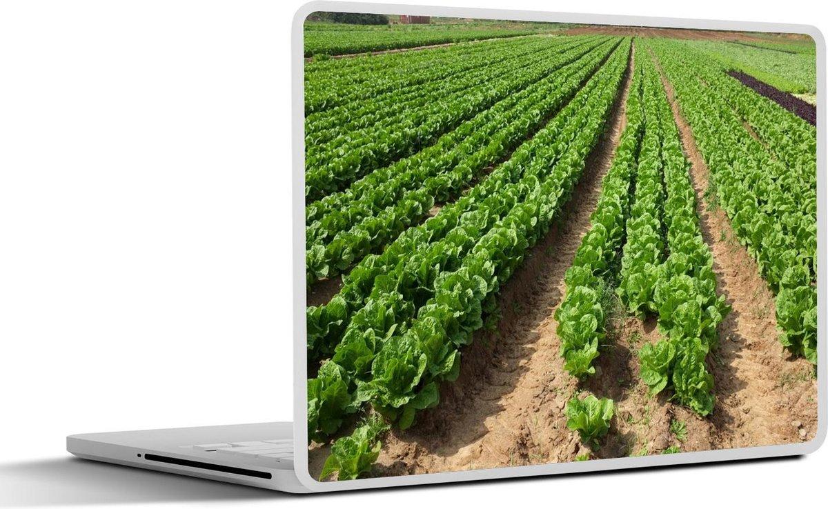 Laptop sticker - 17.3 inch - Een veld bindsla dat klaar is om te oogsten
