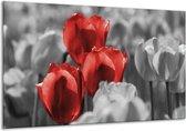 Glasschilderij Tulpen | Rood, Grijs, Zwart | 120x70cm 1Luik | Foto print op Glas |  F002768