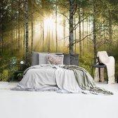 Zonnestralen in berkenbos Bos - Natuur - Stilte - zonsopkomst  - Fotobehang Vlies 384 x 260 cm