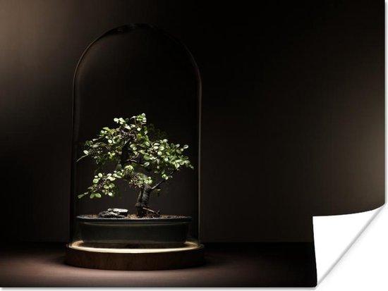 Bol Com Beeld Van Een Donkere Ruimte Met Kleine Bonsai Boom Onder Een Glazen Stolp Door Het