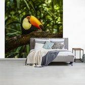 Fotobehang vinyl - Reuzentoekan op een tak breedte 260 cm x hoogte 260 cm - Foto print op behang (in 7 formaten beschikbaar)