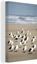 Groep grote mantelmeeuwen op het strand bij zee Canvas 60x90 cm - Foto print op Canvas schilderij (Wanddecoratie woonkamer / slaapkamer)