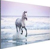 Paard op het strand Aluminium 60x40 cm - Foto print op Aluminium (metaal wanddecoratie)