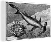 Een illustratie van een hamerhaai in de zee canvas 120x80 cm - Foto print op Canvas schilderij (Wanddecoratie woonkamer / slaapkamer) / Wilde dieren Canvas Schilderijen